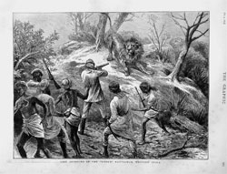 Lion Shooting Gheer Kattiawar India Hunting Sport from THE GRAFIC Oct,4,1873