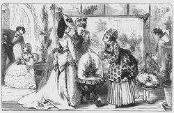 Wardian Cases in Victorian erea